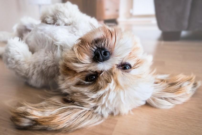 Blocul în care trebuie să ai neapărat câine dacă vrei să locuiești