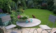 Cum să te bucuri mai mult de grădina ta vara asta Gradina ta este locul ideal