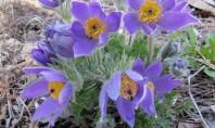 Plante superbe pentru grădini de la Biosolaris Producător de Plante Chiar daca poate aveti la dispozitie