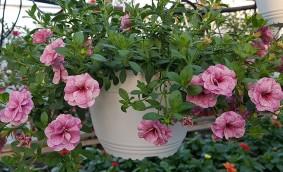 Decor de sezon cu plante mixte curgatoare de la Biosolaris