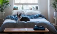 Ce poate fi mai banal ca un dormitor și de ce ne preocupă atât de mult?