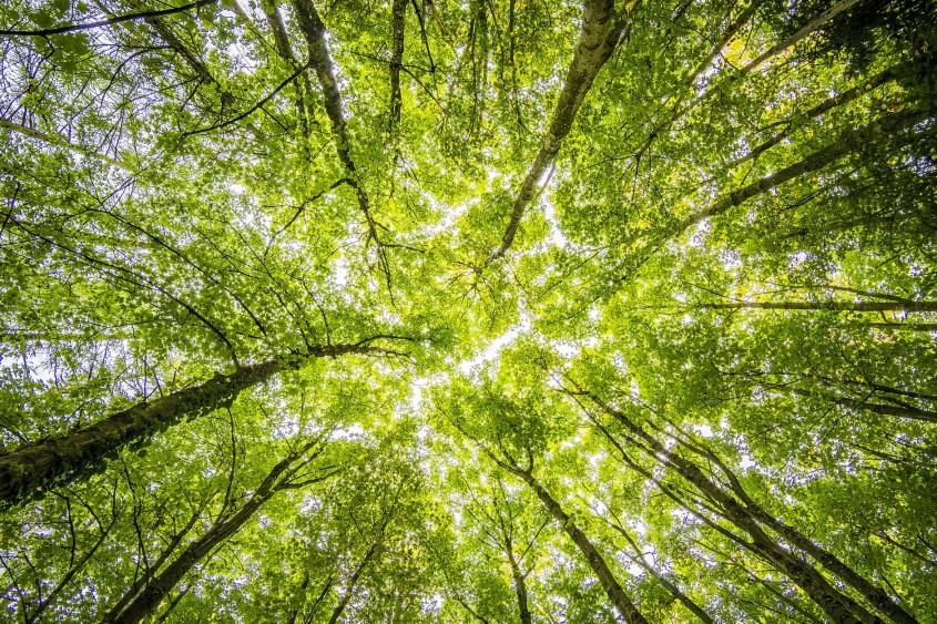 Țara care a plantat 350 de milioane de copaci în 12 ore