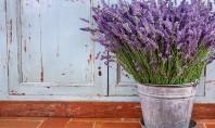 Câteva plante și ierburi care alungă țânțarii din grădina ta Desi razboiul impotriva lor se poarta