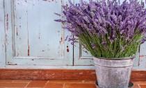 Câteva plante și ierburi care alungă țânțarii din grădina ta