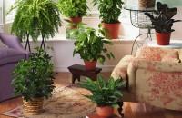 10 plante de interior care purifica aerul! Iata o solutie foarte simpla, dar cu rezultate