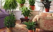 10 plante de interior care purifica aerul!