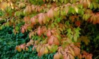 5 lucrari in gradina pentru inceputul toamnei! Septembrie inseamna inceputul scolii culorile intelepte ale naturii sau