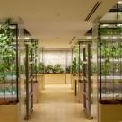 Pasona HQ, o ferma urbana intr-o cladire de birouri din Tokyo