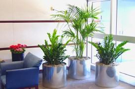 Obiecte de decor vii: plantele de interior