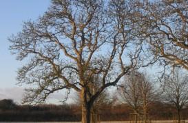 Ingrijiri de toamna pentru copacii din gradina