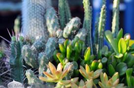 Plante de apartament. Un colt decorativ, cu cactusi si suculente