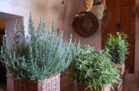 Mini-gradina din balcon: martie, luna plantarii semintelor