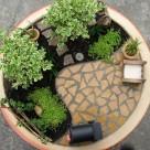 O gradina miniaturala intr-un ghiveci
