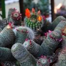 Zece plante de apartament usor de intretinut