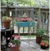 colivia jardiniera