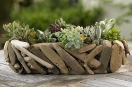 Gradini cu cactusi si plante suculente. Idei de amenajare