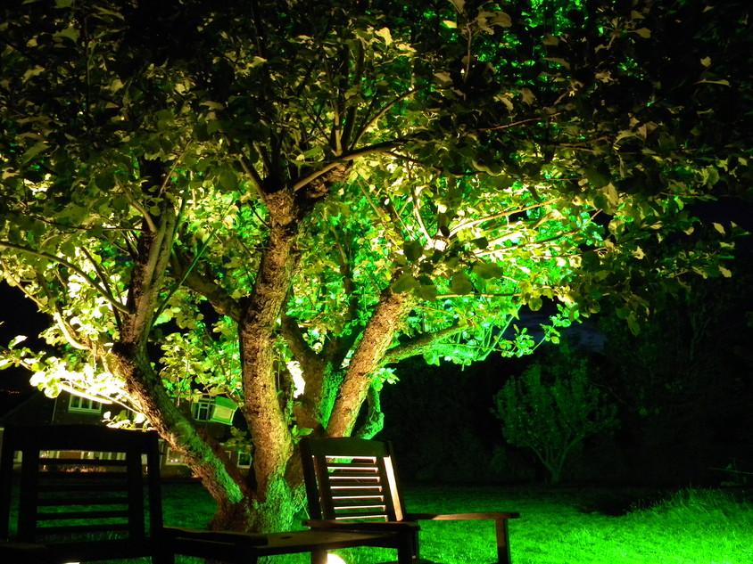Cu plantele sub reflector. Idei de iluminare ambientala exterioara