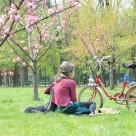 Tu ai voie sa stai pe iarba in parcuri?