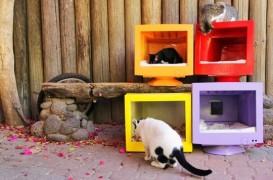 O idee originala pentru proprietarii de pisici: refolositi obiecte de plastic