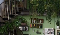 Ambient la locul de munca un birou plin de plante Deborah proprietara Snog Productions a constatat