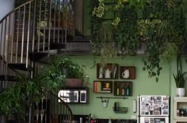 Ambient la locul de munca: un birou plin de plante