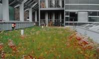 Cel mai usor acoperis verde Incarcarea redusa a acoperisului verde e importanta atat la cladiri noi