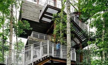 Casa din copac, loc de studiu pentru cercetasi