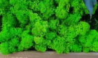 Prezentare tablou verde din muschi si licheni